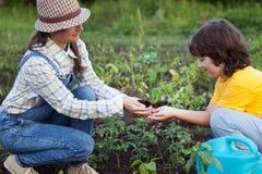 La mère donne à son soleil un germe dans le jardin d'été Image stock