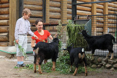 La mère et le fils alimentent avec des branchements de chèvres de montagne Photographie stock