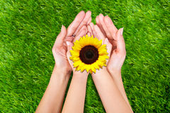 Fleur dans des mains photos stock