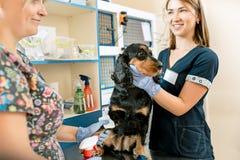 La médecine, le soin des animaux familiers et le concept de personnes - chien et docteur de vétérinaire à la clinique de vétérina Photographie stock libre de droits