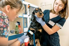 La médecine, le soin des animaux familiers et le concept de personnes - chien et docteur de vétérinaire à la clinique de vétérina Photographie stock