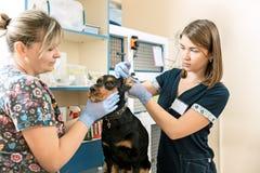 La médecine, le soin des animaux familiers et le concept de personnes - chien et docteur de vétérinaire à la clinique de vétérina Photos stock