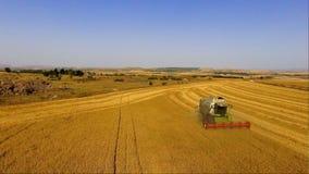 La m?quina segadora de la visi?n a?rea recolecta el trigo en la puesta del sol Cosecha del campo de grano, estaci?n de la cosecha almacen de video