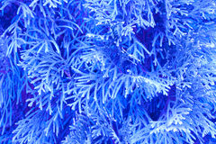 La mañana azul ramifica fondo Imágenes de archivo libres de regalías