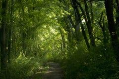 La mañana clara verde Fotos de archivo libres de regalías