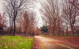 La mañana en el parque público Foto de archivo
