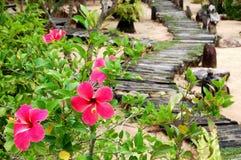 La mañana florece en el jardín cerca de la playa Foto de archivo libre de regalías