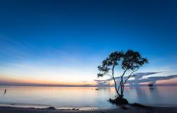 La mañana hermosa ajardina con el cielo azul en la playa fotografía de archivo