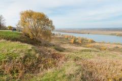 La mañana hermosa en bosque del otoño con el sol irradia Imagen de archivo libre de regalías
