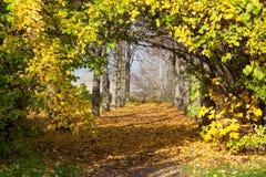 La mañana hermosa en bosque del otoño con el sol irradia Imagenes de archivo