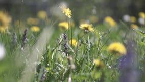 La macchina fotografica si muove attraverso i bei fiori ed erba nel campo stock footage