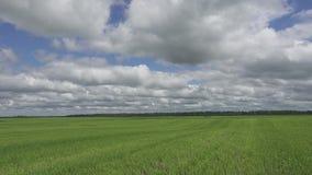 La macchina fotografica si muove con un'erba falciata verde contro lo sfondo del cielo blu con le nuvole bianche attraverso il ca stock footage