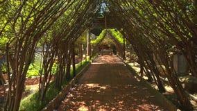 La macchina fotografica si muove tramite il tunnel decorativo dell'albero sviluppato specialmente archivi video