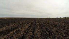 La macchina fotografica si sposta per il campo in cui il raccolto è stato raccolto Movimento lento archivi video