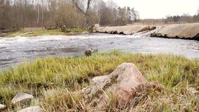 La macchina fotografica sta spostandosi per l'acqua dolce pulita di una corrente della foresta che investe le rocce muscose video d archivio