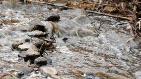 La macchina fotografica sta spostandosi per l'acqua dolce pulita di una corrente della foresta che investe le rocce muscose stock footage