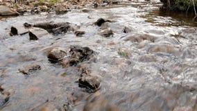 La macchina fotografica sta spostandosi per l'acqua dolce pulita di una corrente della foresta che investe le rocce muscose archivi video