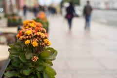 La maceta con las flores anaranjadas cuelga en la calle Fotografía de archivo