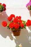 La maceta de cerámica con las flores colgó en la pared, adornamiento Imagen de archivo libre de regalías