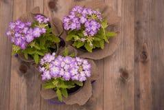 La maceta violeta con las pequeñas flores púrpuras sobre plano de madera del fondo de Rustci pone el espacio de la copia Imagen de archivo libre de regalías