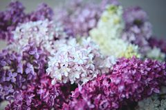 La macro de la lila florece la flor grande Imagenes de archivo