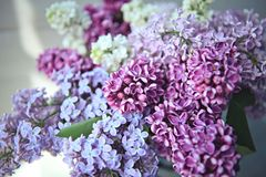 La macro de la lila florece la flor grande Foto de archivo