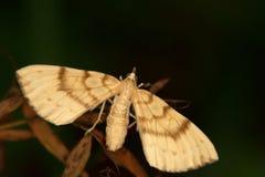 La macro di un butterfly Fotografie Stock