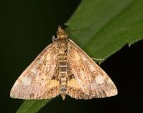 La macro di un butterfly Immagini Stock Libere da Diritti
