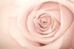 La macro envejeció el fondo color de rosa Imagen de archivo