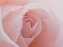 La macro fleur belle s'est levée Photographie stock libre de droits
