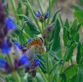 La macro foto del fondo dell'estate con le farfalle decorative con velluto traversa contro Fotografia Stock Libera da Diritti