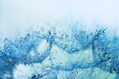 La macro photo abstraite des graines d'usine avec de l'eau se laisse tomber Photographie stock libre de droits