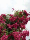 La macro photo avec un fond décoratif de jardin fleurit les roses bouclées Photo stock