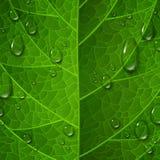 La macro vue de la surface verte de feuille avec de l'eau chute illustration stock