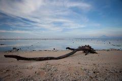 La madera de deriva en la orilla de un mar tropical se forma como una serpiente grande Imagenes de archivo