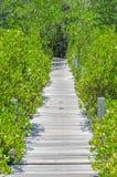 La madera del camino del puente y el árbol verde Imágenes de archivo libres de regalías