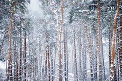 La madera del invierno Imagen de archivo libre de regalías
