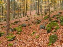 La madera del otoño con la haya se va en la tierra Fotografía de archivo