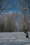 La madera del `s del invierno. Foto de archivo libre de regalías