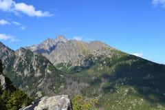 La madera del verde de la naturaleza de la montaña se nubla el parque Imágenes de archivo libres de regalías
