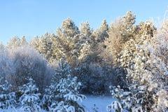 La madera en nieve Fotos de archivo libres de regalías