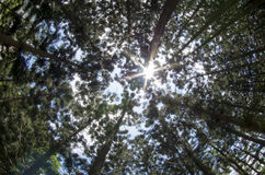La madera en Tainan Rark Imagen de archivo libre de regalías