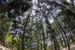 La madera en Tainan Rark Imagenes de archivo