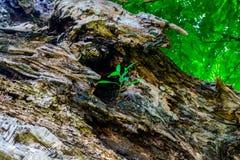 La madera es haber resistido natural, brote del árbol imagen de archivo