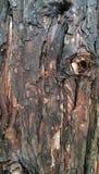 La madera texturiza el fondo Imagenes de archivo