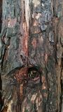 La madera texturiza el fondo Imagen de archivo