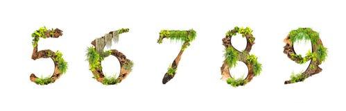 La madera y las plantas del alfabeto texturizan 5 6 7 8 9 aisladas en el fondo blanco Fotos de archivo libres de regalías