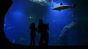 La madre e la figlia stanno visitando Oceanarium il giorno del ` s della madre Stanno avendo molto divertimento che guardano per  stock footage