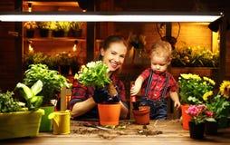 La madre ed il bambino della famiglia coltivano i fiori, piantine del trapianto in luccio Fotografie Stock Libere da Diritti