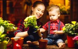 La madre ed il bambino della famiglia coltivano i fiori, piantine del trapianto in luccio Fotografia Stock Libera da Diritti
